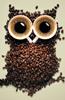 coffee_owl-65x100